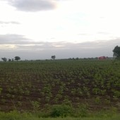 Farm Fields, Hasanabad, Telangana