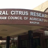 Central Citrus Research Institute, Nagpur