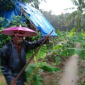Farmer, Joseph Pallan Farm, Mala, Kerala